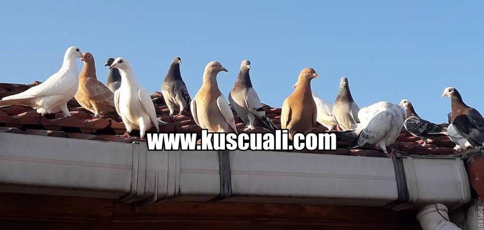 www.kuscuali.com